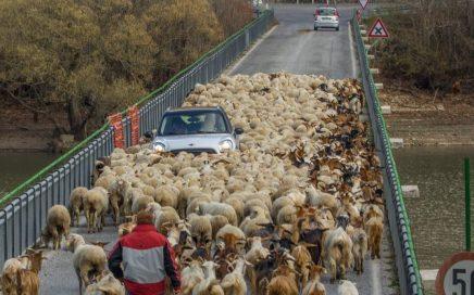pecore sul lago di barrea